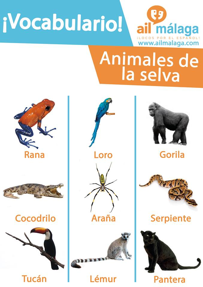 vocabulario animales de la selva