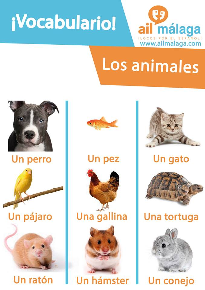 vocabulario animales