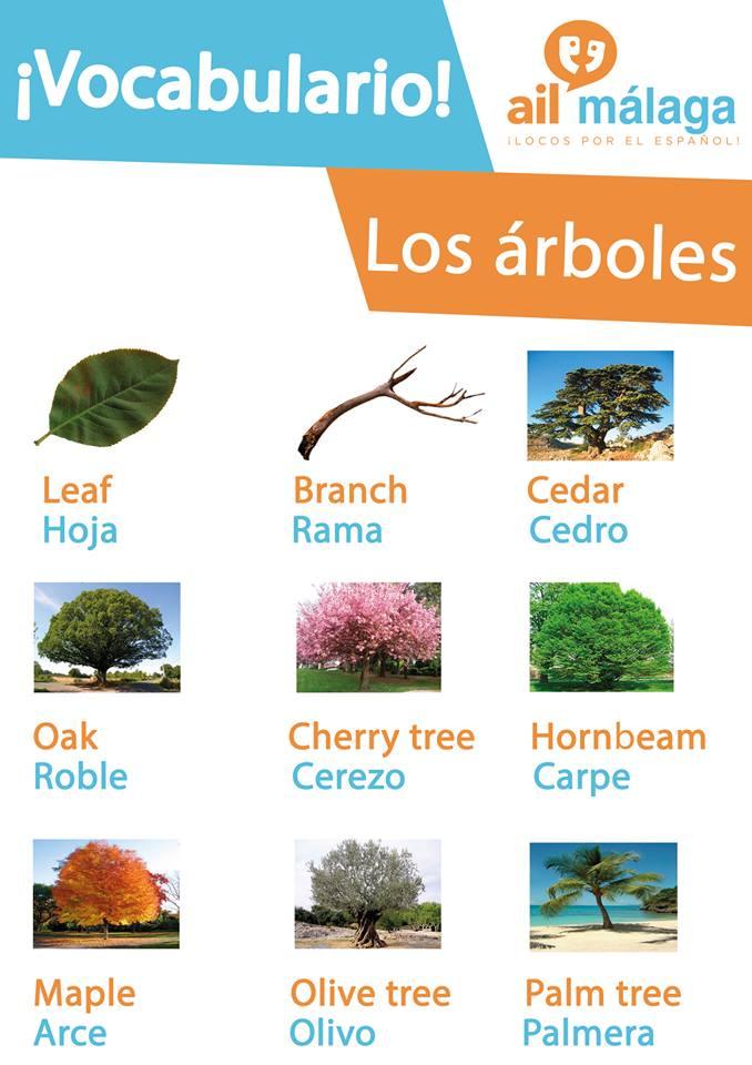 vocabulario arboles