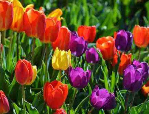 Vocabulario de la primavera