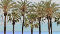 la-spiaggia piu bella di Malaga
