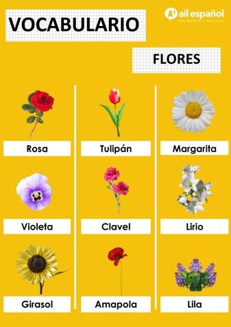 FLORES - AIL Malaga Spanish Language School study materials
