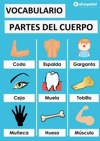 PARTES DEL CUERPO - AIL Malaga Spanish Language School study materials