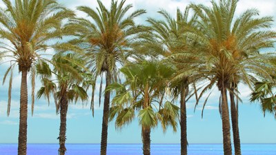 Palmen im sonnigen Spanien. Entdecken Sie mit Ail Malaga.